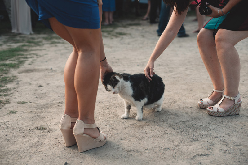 girls petting outdoor cat at wedding